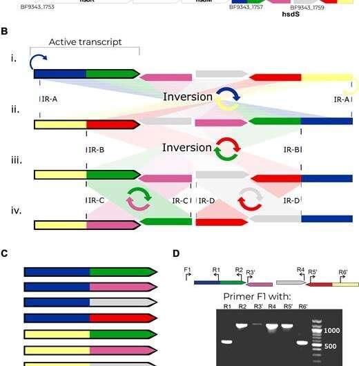 Evolutionary secrets of the microbiome