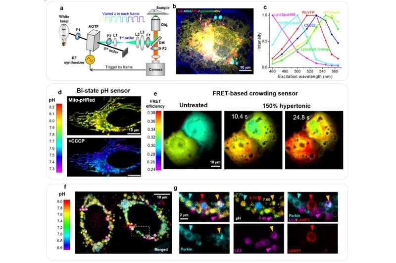 Excitation spectral microscopy integrates multi-target imaging and quantitative biosensing
