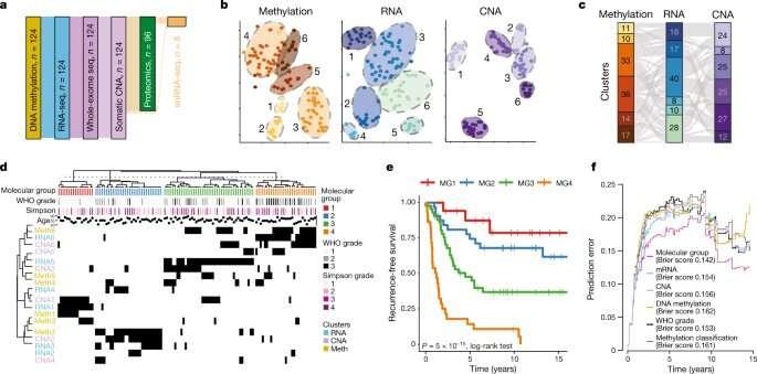 Expanding understanding of brain tumor biology to unlock new treatment options