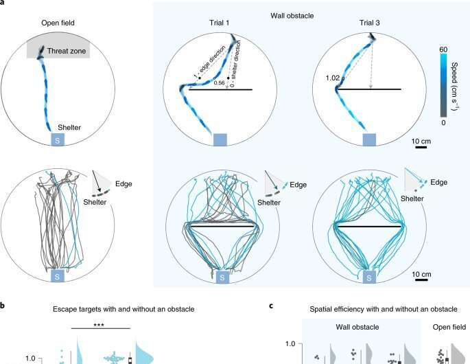 Experiments challenge cognitive-map hypothesis in mice