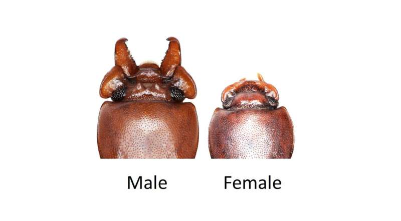 Experiments show natural selection opposes sexual selection