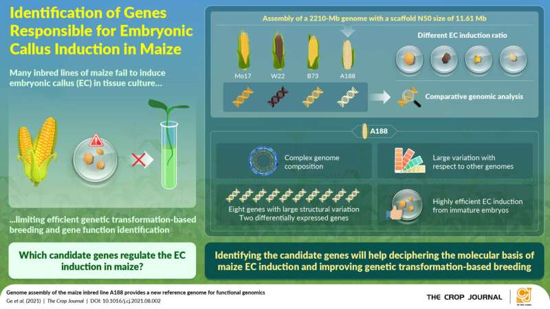 Exploring the genetic ma(i)ze: Functional genomics can help molecular breeding of maize