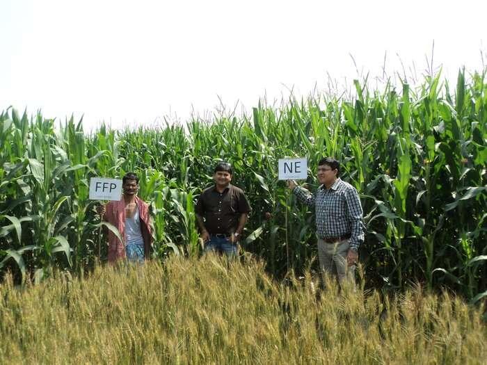 La investigación centrada en las granjas se centra en la variabilidad del rendimiento en los sistemas de cereales de los pequeños agricultores de Nepal