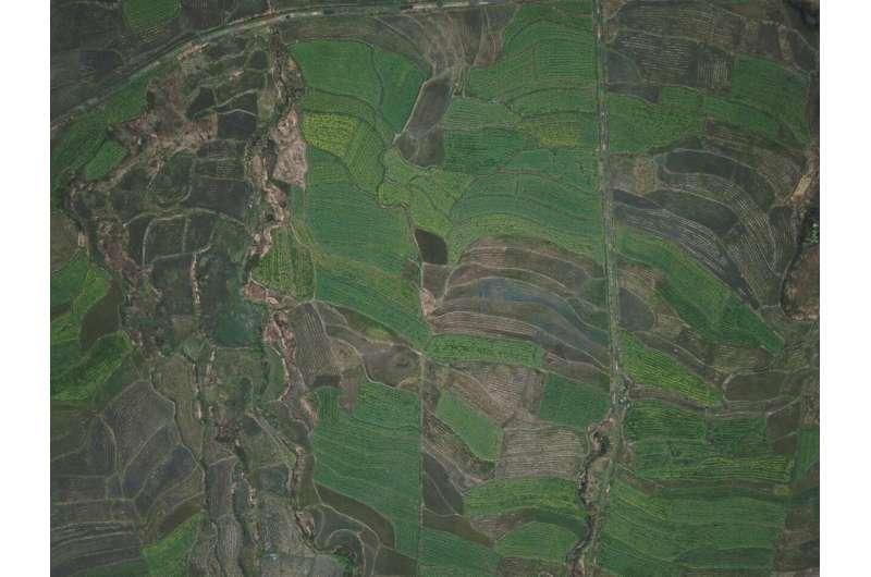 La consolidación de granjas tiene un efecto negativo sobre los polinizadores silvestres