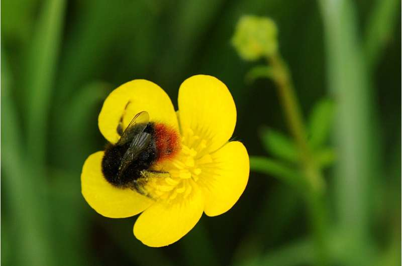 Farmers help create 'Virtual safe space' to save bumblebees
