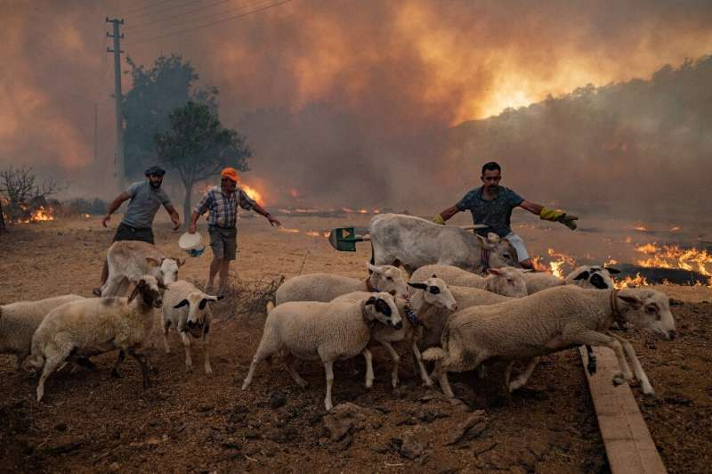 Farmers pulled their screaming animals out of burning barns to take them to the relative safety of the beach