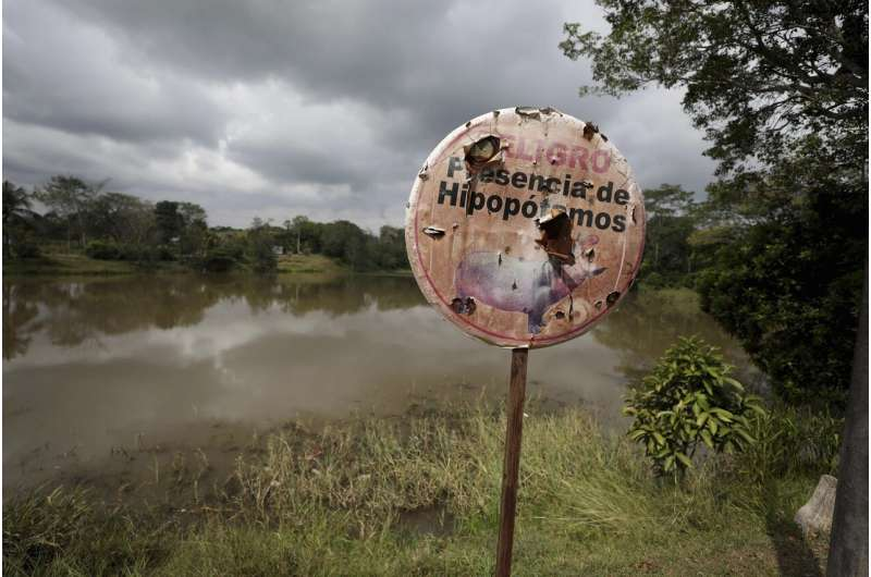 Fear and love surround Escobar's hippos thriving in Colombia