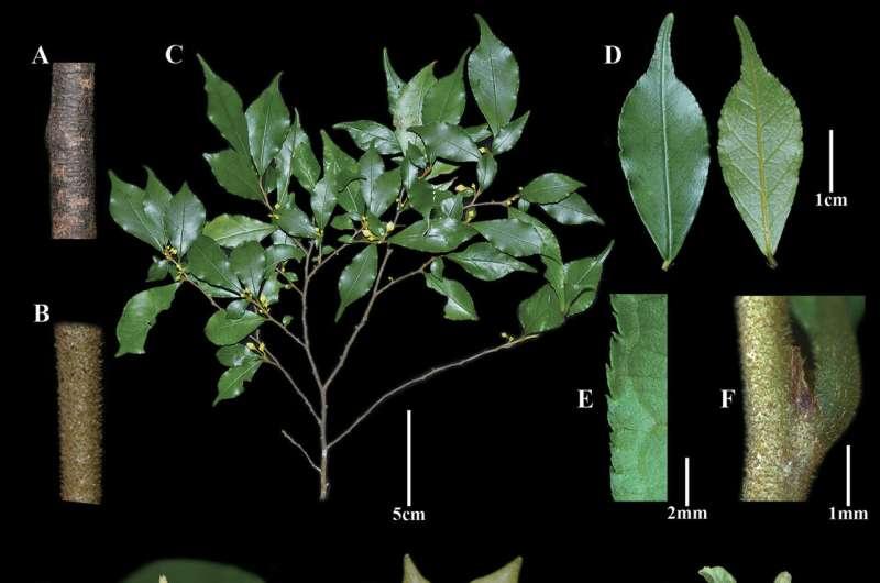 Fenghwaia, new monotypic genus of Rhamnaceae from China
