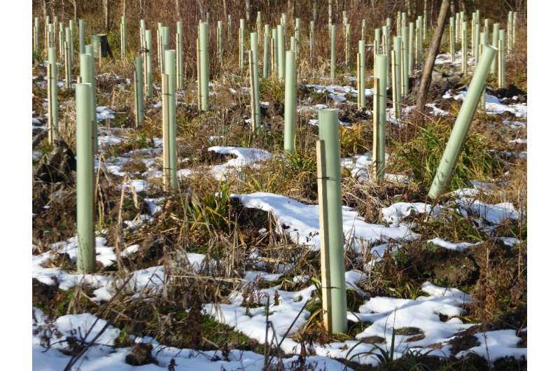 Finding plastic-free alternatives to protect young trees