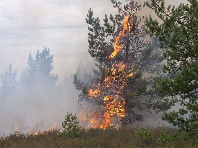 Fine particles from wildfire smoke impact children's respiratory health