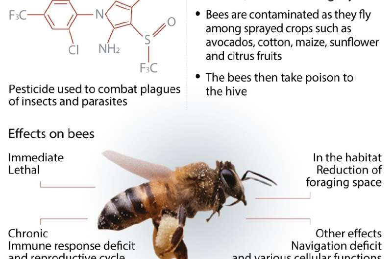 Fipronil—threat to bees