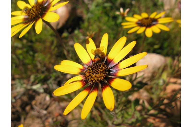 First global estimate of importance of pollinators for seed production in plants