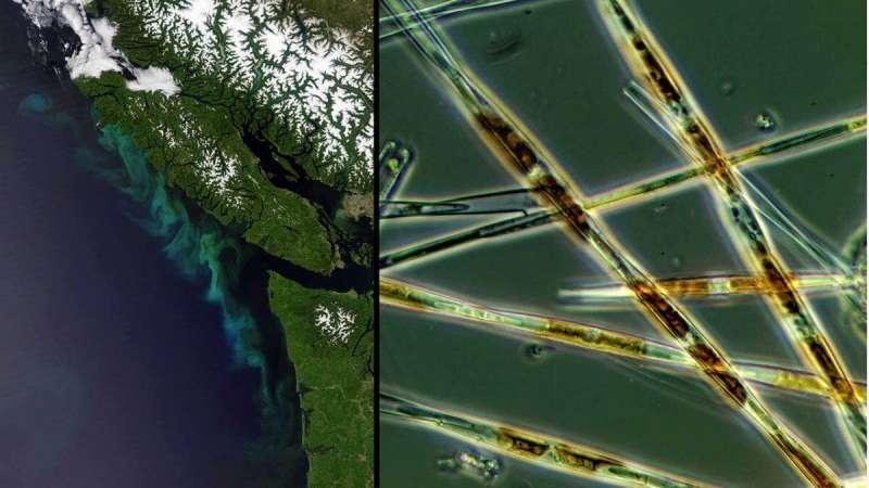 First global statistical analysis of harmful algal blooms