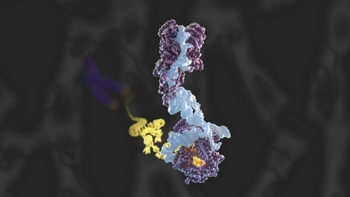 First atomic model of human telomerase constructed by electron cryo-microscopy