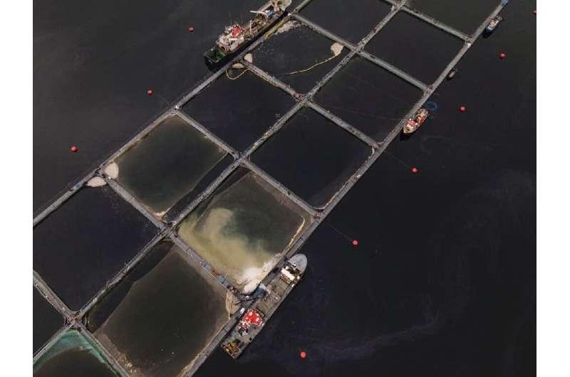 La piscicultura se multiplicó por 16 durante el período de 33 años del estudio, lo que llevó a más informes de floraciones de algas nocivas.