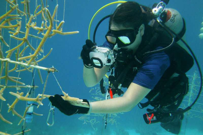 FIU doctoral candidate helps guide research to support future coral conservation