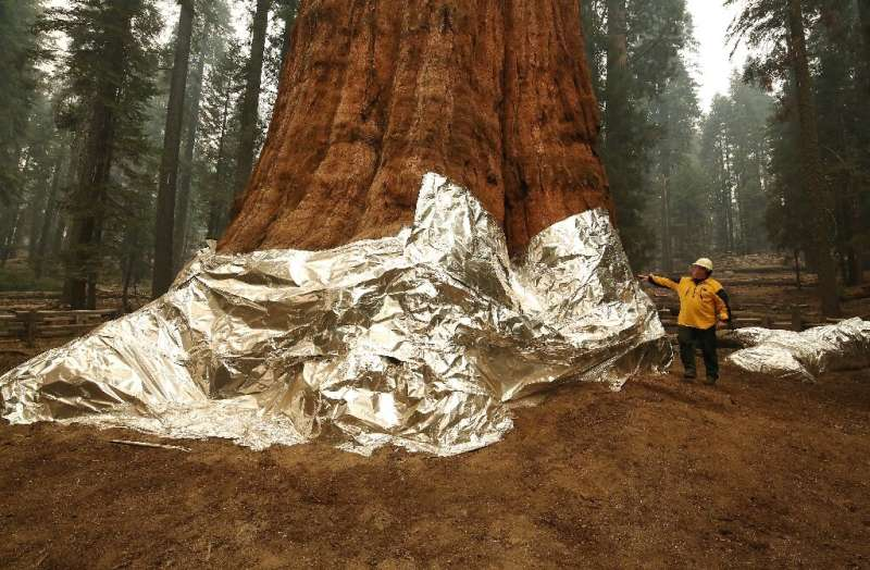 Flames got close to the General Sherman, the world's biggest tree, but were pushed back thanks to years of controlled burns that