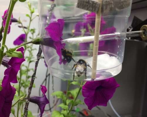Flowers release their perfume in response to electricity of a bee's touch