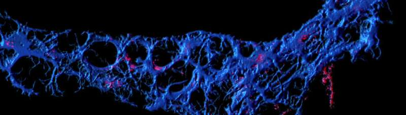 Following your gut: The remarkable role of intestinal cells