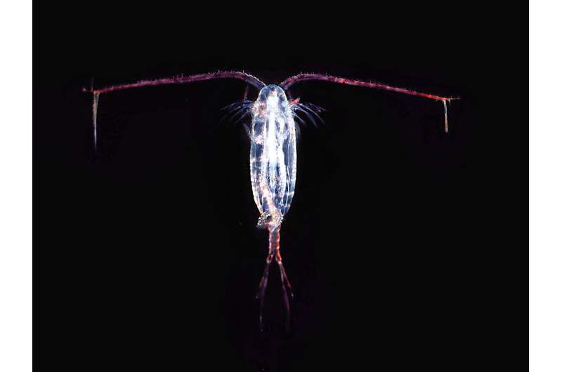 For copepods, there is no free lunch when coping with climate change