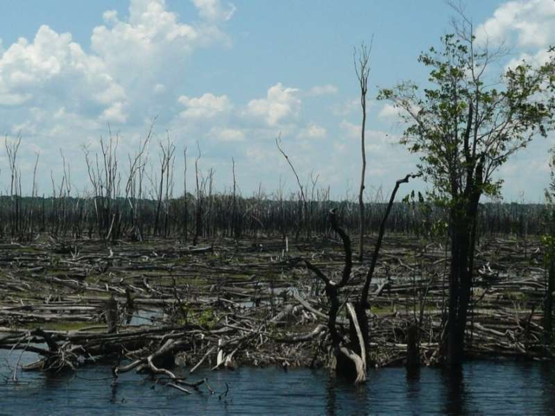 Forest fires drive expansion of savannas in the heart of the Amazon