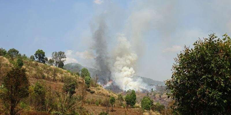 Forest fires linked to tens of thousands of avoidable deaths
