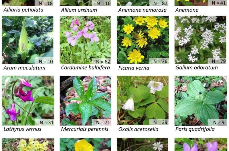 El uso de los bosques cambia los ciclos de vida de las flores silvestres