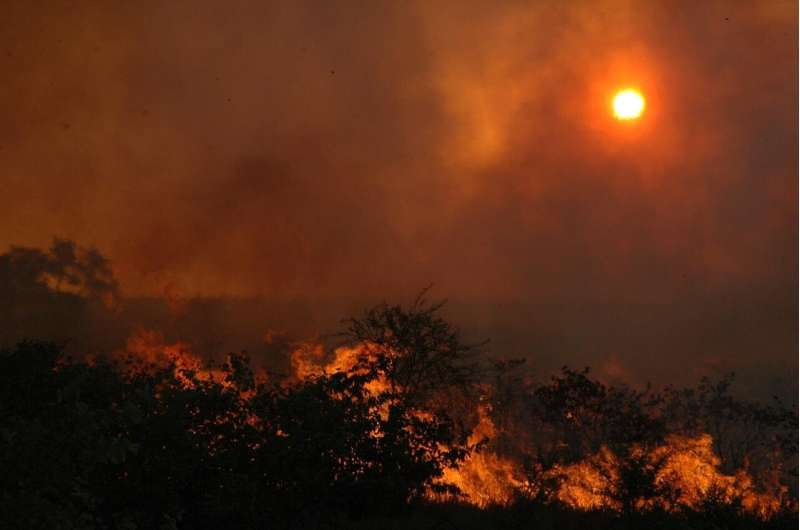 Forests' long-term capacity to store carbon is dropping in regions with extreme annual fires