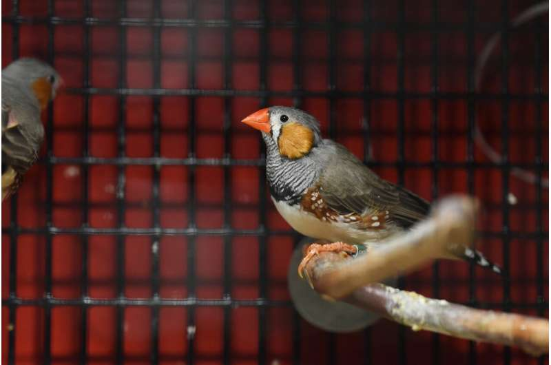 Forming sound memories: Autism gene plays key aspect in birdsong