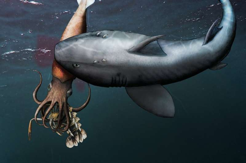 Fossil found of ancient squid-like creature feeding on crustacean after attack by shark-like creature