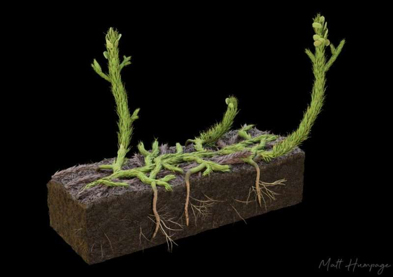 Fossil study gets to root of Earth's early plants