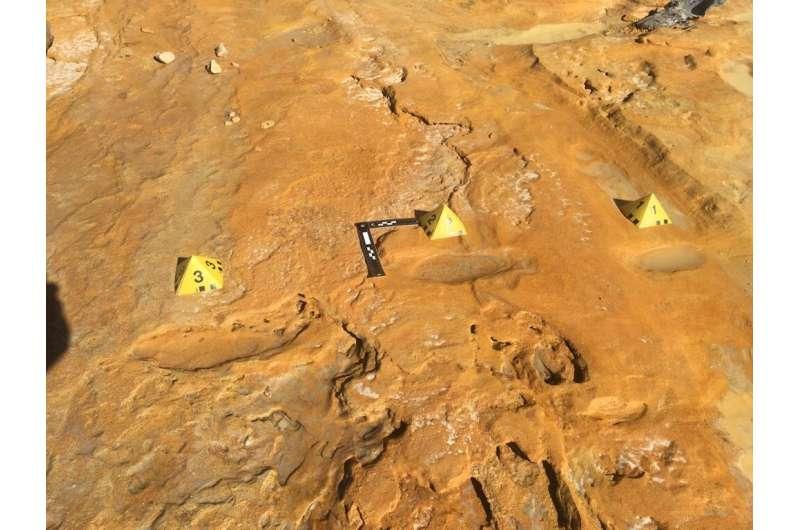 Fossilized footprints reveal prehistoric elephant nursery