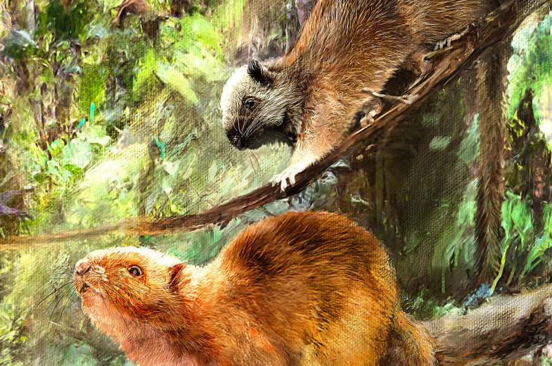 "Fossils of ""giant cloud rats"" discovered in Philippine caves"