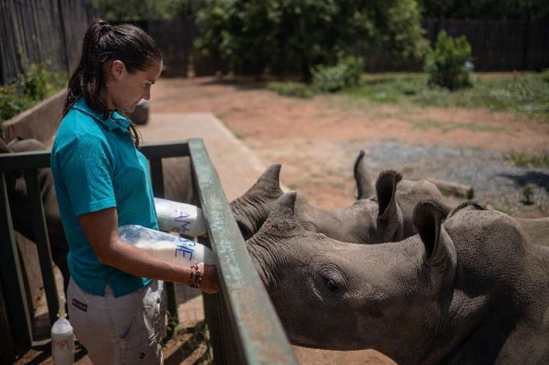 Four staff and two volunteers work around the clock to care for the rhino calves, sometimes even sleeping next to the youngest i