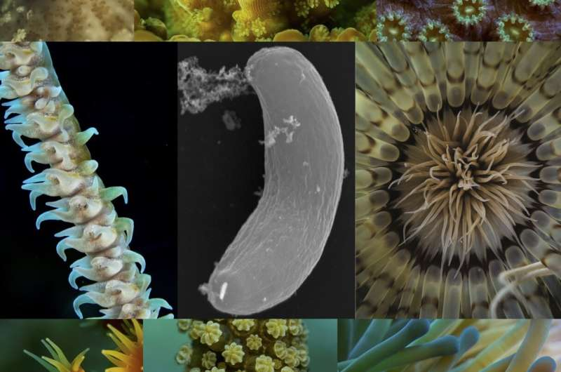 Friend or foe? Researchers investigate the mysterious microbes living inside corals