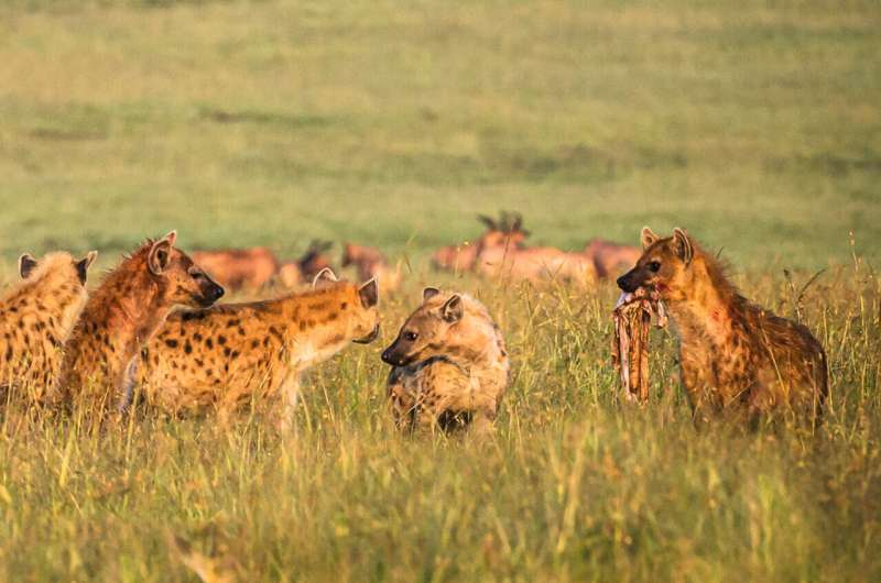Friends and enemies 'make sense' for long-lived animals