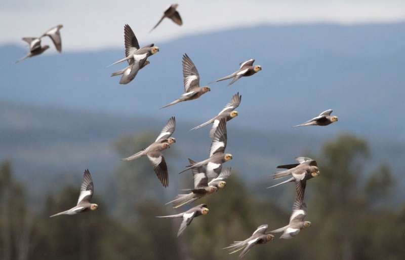 From Avocet to Zebra Finch: big data study finds more than 50 billion birds in the world