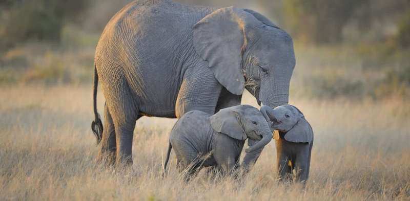 From baby blue-tongues to elephant doulas: motherhood across the animal kingdom