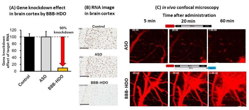 From blood to brain: Delivering nucleic acid therapy to the CNS