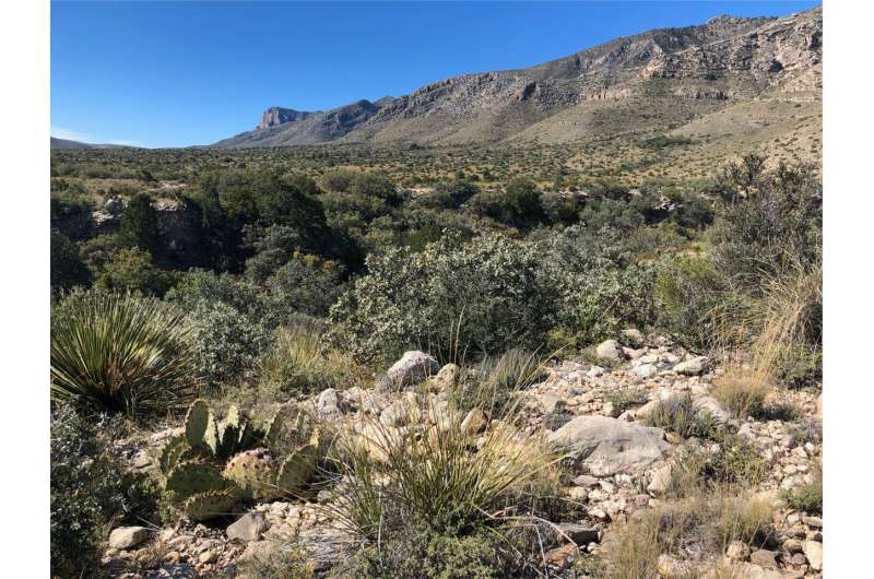 From coral reef to goat ranch: Uncovering the botanical history of the Guadalupe Mountains