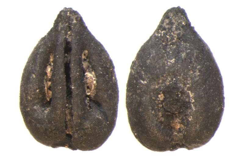 Los cultivos de frutas llegaron a la península oriental hace casi 3.000 años
