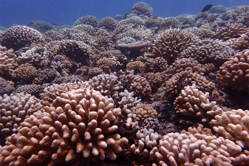 FSU researchers discover how 'cryptic species' respond differently to coral bleaching