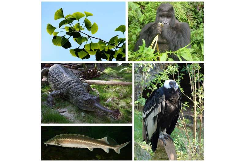 Functional consequences of global biodiversity loss guide future nature conservation
