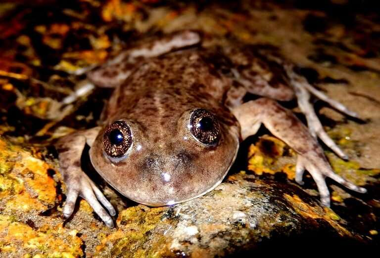 Funding front-line action for the world's forgotten frogs