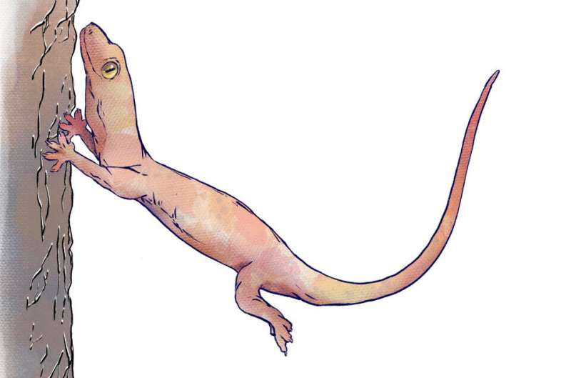 Geckos glide, crash-land, but don't fall thanks to tail