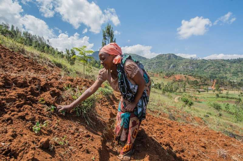 Gender discrimination threatens crop yield among smallholder farmers in Africa, researchers say