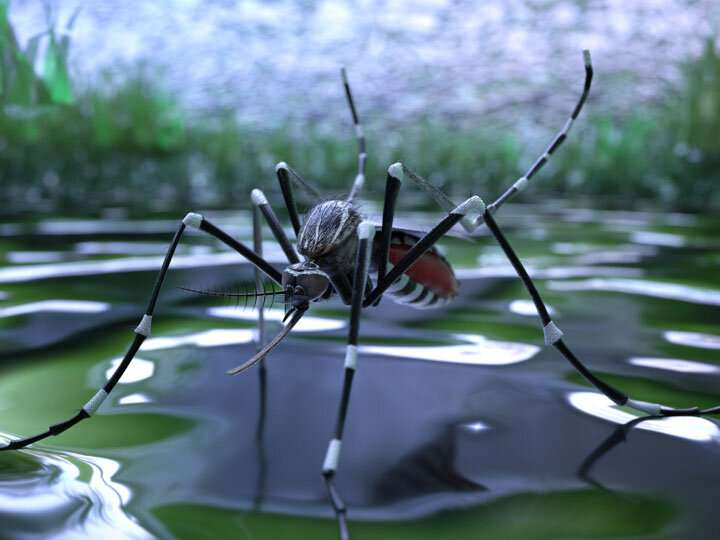 Gene editing could render mosquitos infertile, reducing disease spread