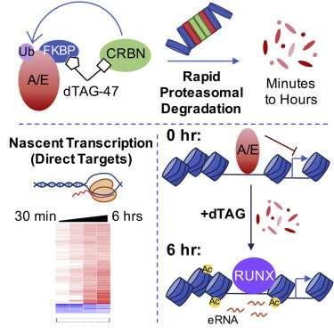 Gene network for leukemia factor
