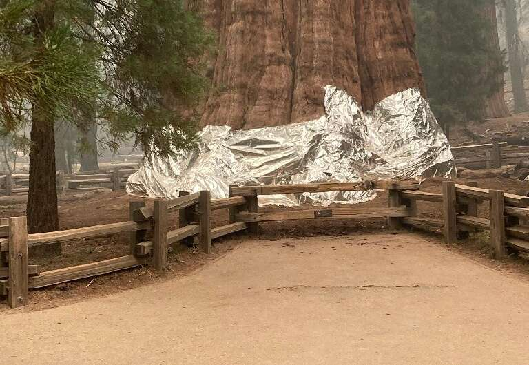 General Sherman, the world's biggest tree, has been wrapped in foil to protect it from flames