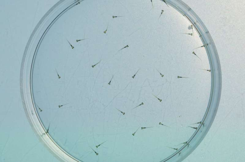 Genes and collective behaviour